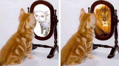 cat mirror looking into mirror